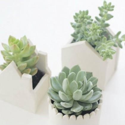 Mini Pot Plant 2 Unicart Store