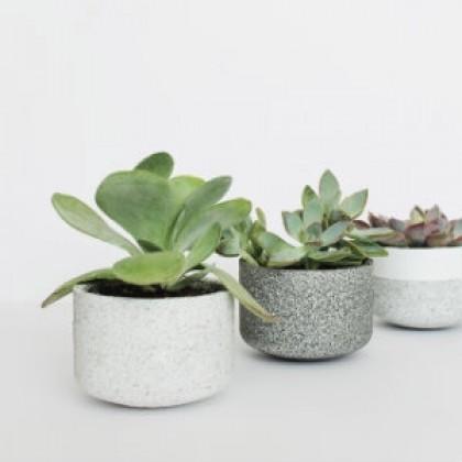 Mini Pot Plant 6 Green Plant